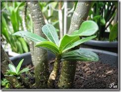 Plant01 !
